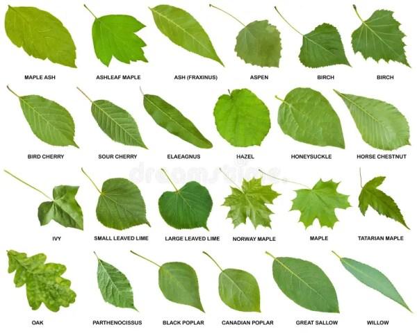 Собрание зеленых листьев деревьев с именами Стоковое Фото ...