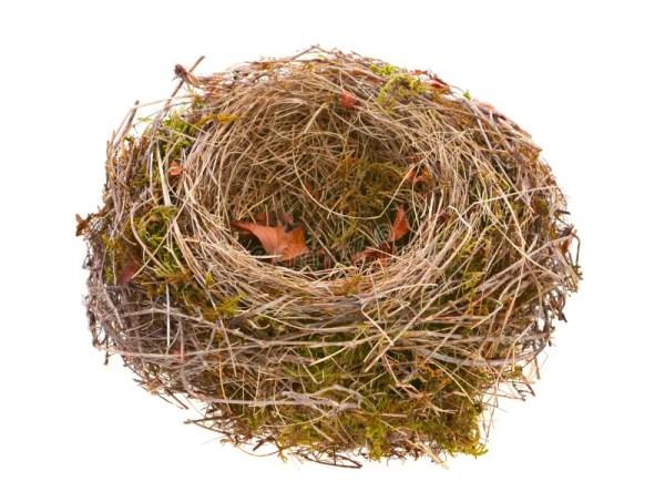 Bird nest empty stock image. Image of nobody, home, small ...