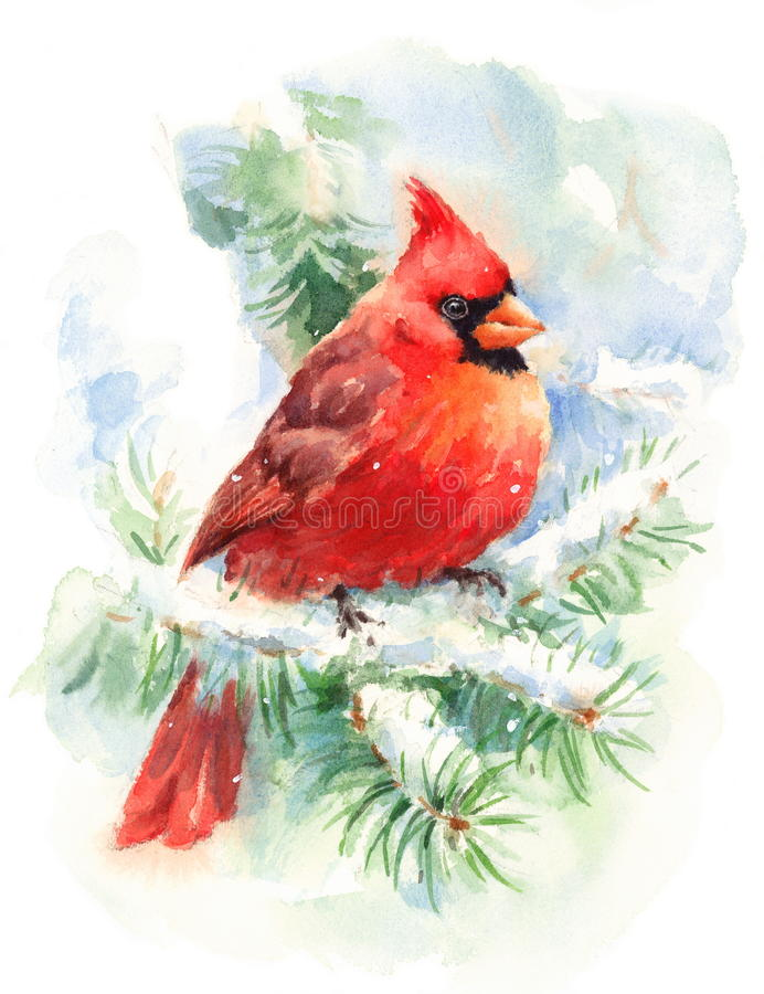 Cardinal Bird Watercolor Winter Illustration Hand Painted