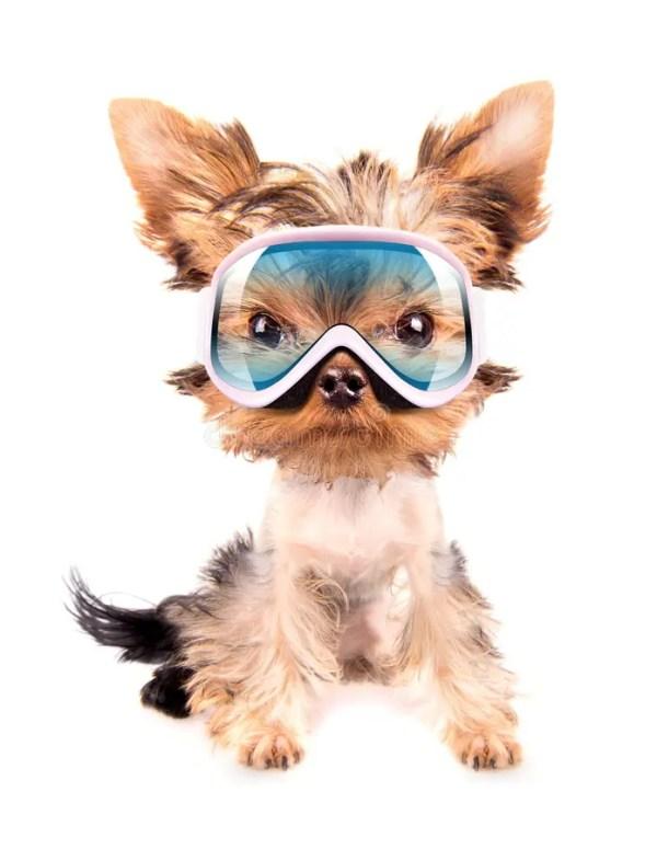 Chien Avec Le Masque De Ski Image stock - Image: 35711221