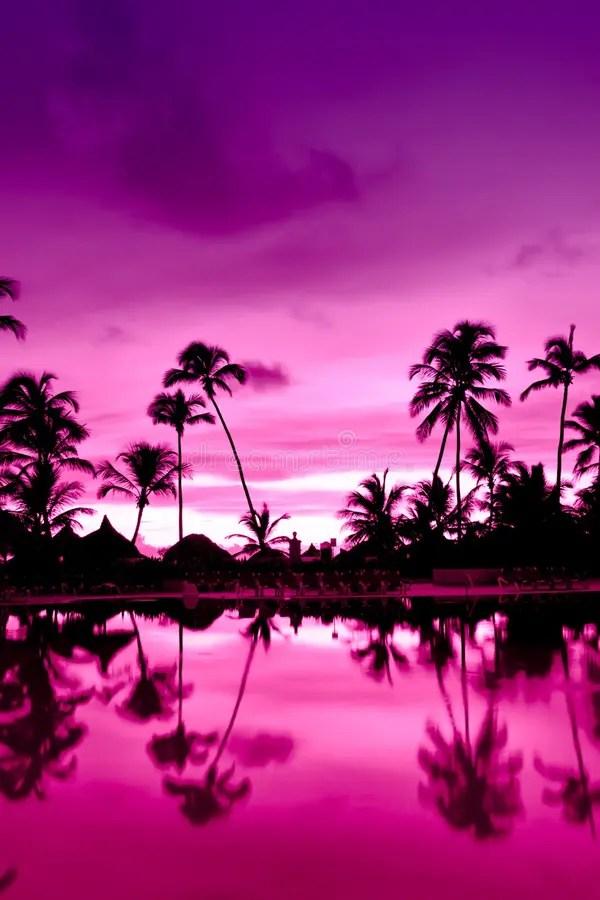 Coucher Du Soleil Rose Et Rouge Au-dessus De Plage De Mer ...