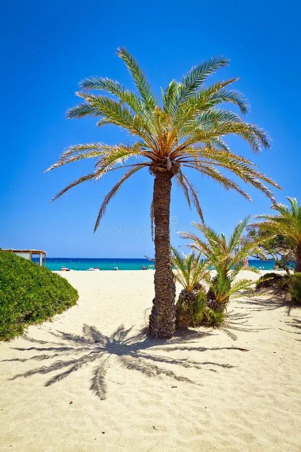 Cretan Date Palm Tree On Idyllic Vai Beach Stock Image