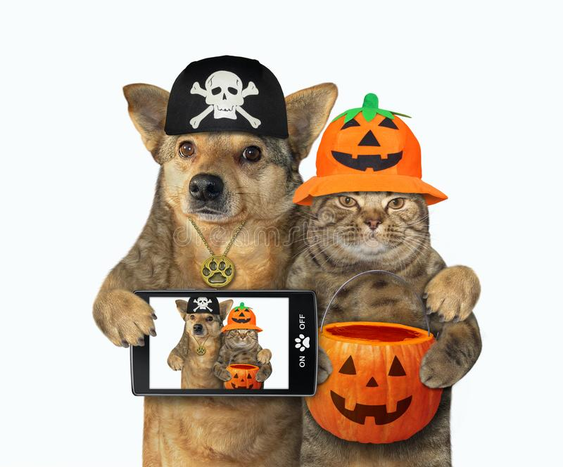 Whether it's a dog costume or cat costume you are looking to put on your furry friend we've got the best selection around. 303 Dog Cat Halloween Photos Free Royalty Free Stock Photos From Dreamstime