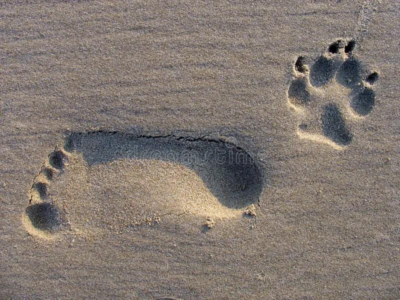 Footstep footwear berdiri di kota bandung, jawa barat dan kini hampir sudah lebih dari 7 tahun berdiri. Footstep stock photo. Image of grey, stripe, brown, foot ...