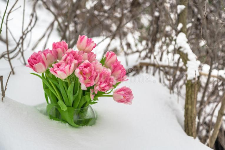 Fresh flowers in the snow stock image  Image of green   67336633 Download Fresh flowers in the snow stock image  Image of green   67336633
