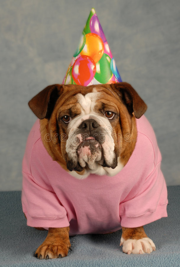 Funny Birthday Dog Stock Image Image Of Look Puppy Portrait 8383795
