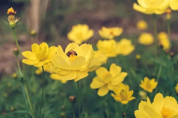 Конец-вверх пчелы на желтом космосе Стоковое Фото ...
