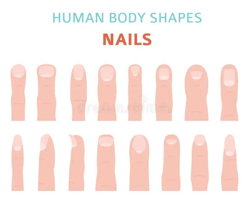 Human Body Shapes Hand Finger Nail Types Set Stock Vector Illustration Of Shapes Medical 123985352