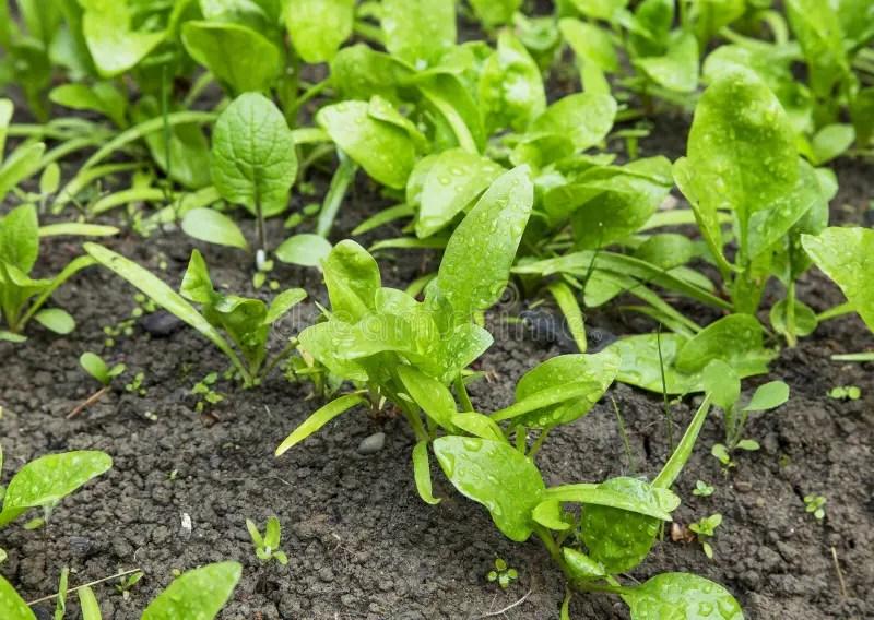Plante Potager Great Pour Larrive De Lautomne Un Beau