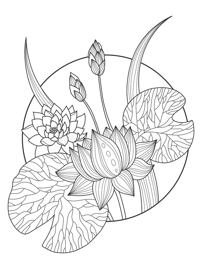 lotus flower coloring book vector illustration stock