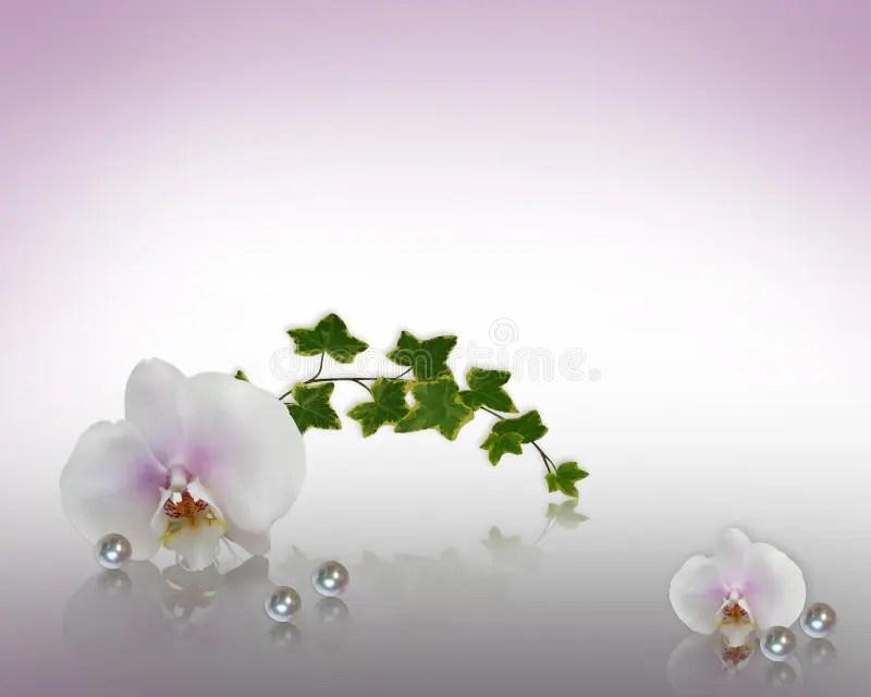 Orchids And Pearls Wedding Invitation Stock Illustration Illustration Of Anniversary Border