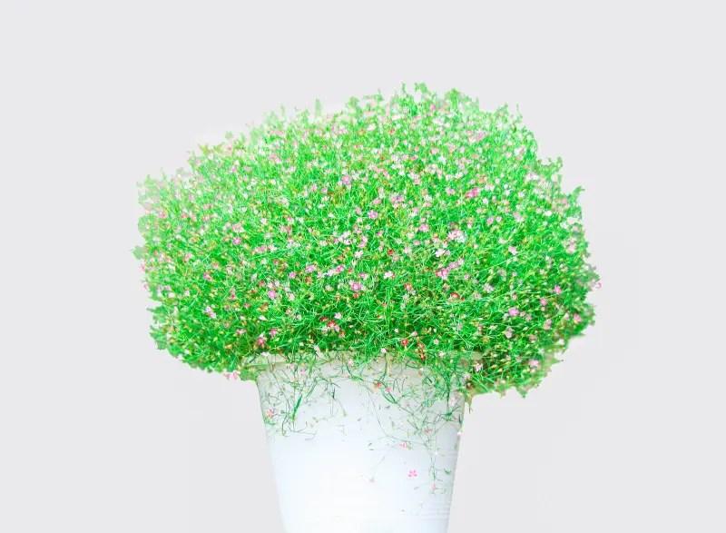 plante verte avec la petite fleur dans
