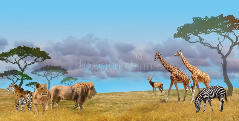 535 267 Wild Animals Photos Free Royalty Free Stock Photos From Dreamstime