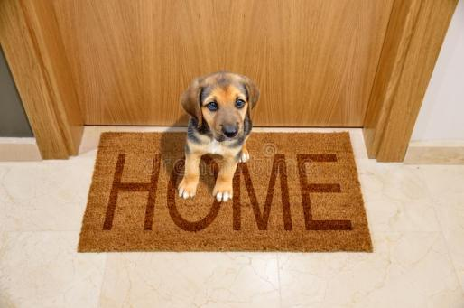 Bringing a new puppy into your home.