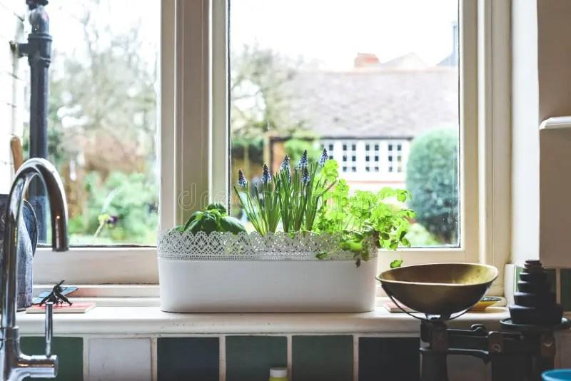 1 118 kitchen window view garden photos