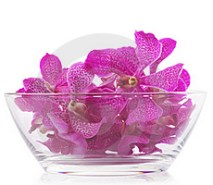 Purple orchid in glass bowl