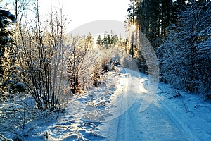 Winter road in sun