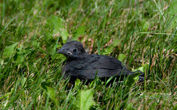Baby Bird Fell Out Of His Nest Stock Photos - Image: 37126793