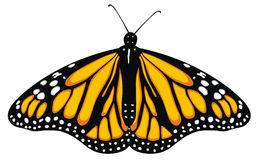 Element For Design Butterfly Vector Stock Vector