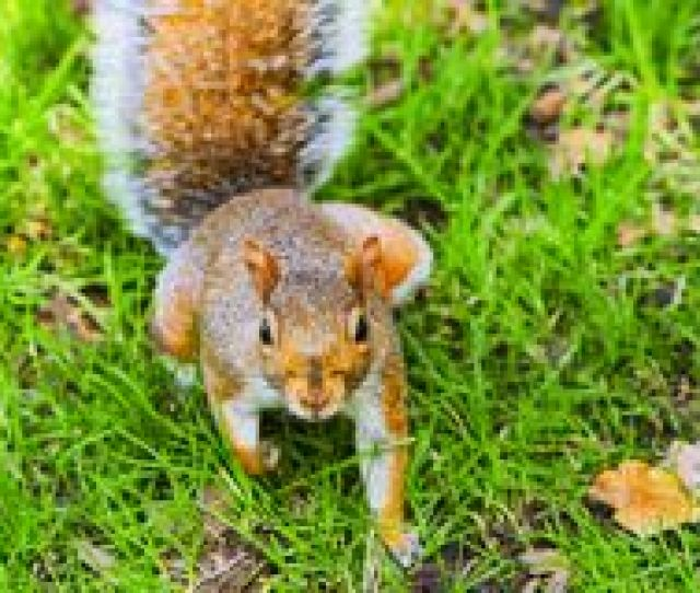 Redhead Naughty Girl Undressing Over American Flag Cheerful Naughty Squirrel In Madison Square Park In Midtown Man Hattan In New York City
