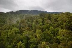 Kuranda Regenwald Queensland Australien Lizenzfreie