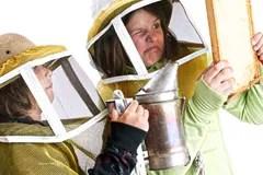 <b>Young</b> <b>beekeepers</b> calming a bee hive Stock Image