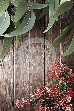 Australian Flowers Summer Gum Leaf Background Stock Photo