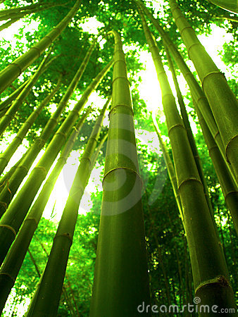 Bamboo Tree Stock Images Image 1083714