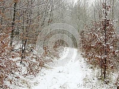 Camino del invierno