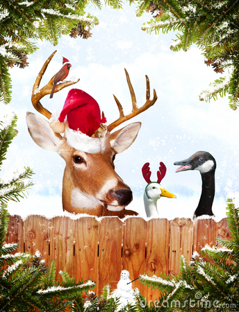 Christmas Animals Royalty Free Stock Photography Image
