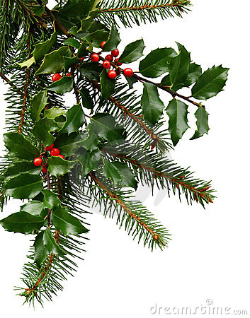 Christmas Evergreens Royalty Free Stock Images Image