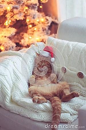 Christmas Stock Photo Image 47525834