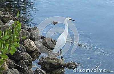 Crane Stock Photo - Image: 51763087