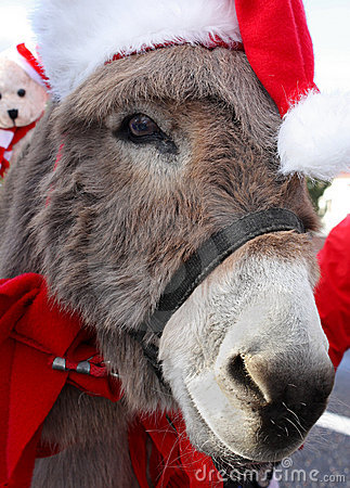 Donkey With Christmas Hat Stock Photos Image 19750443