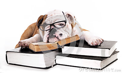 English Bulldog Puppy In Glasses Royalty Free Stock Images