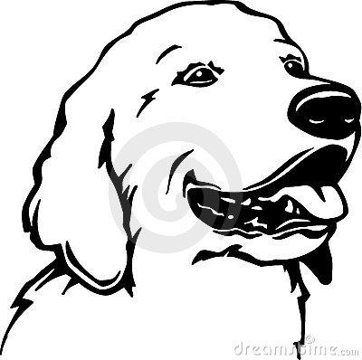 Golden Retriever Stock Images Image 20241884