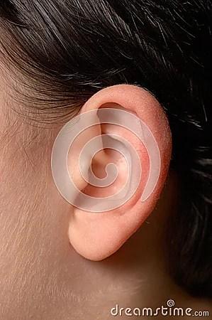 Human Ear Anatomy Royalty Free Stock Photo  Image: 19282265