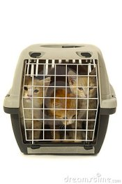 Free Kittens In Transport Box On White Background Royalty Free Stock Photo - 4591435