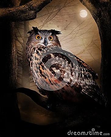 Owl Royalty Free Stock Photos Image 24344208