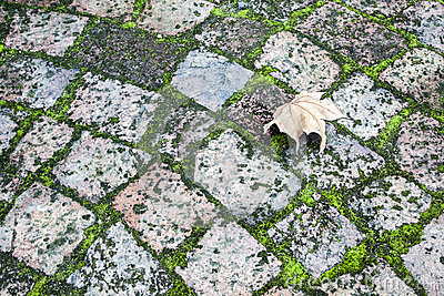 Paving With Moss And A Leaf Royalty Free Stock Image - Image: 25687626