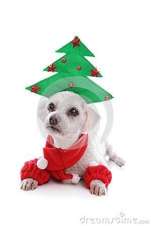Puppy Dog Wearing Christmas Tree Hat Royalty Free Stock