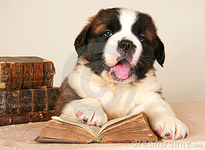 St. Bernard dog reading book getting education