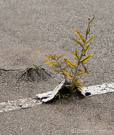 Weeds in asphalt