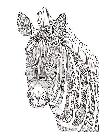Zebra Adult Coloring Page Stock Illustration Image 69518600