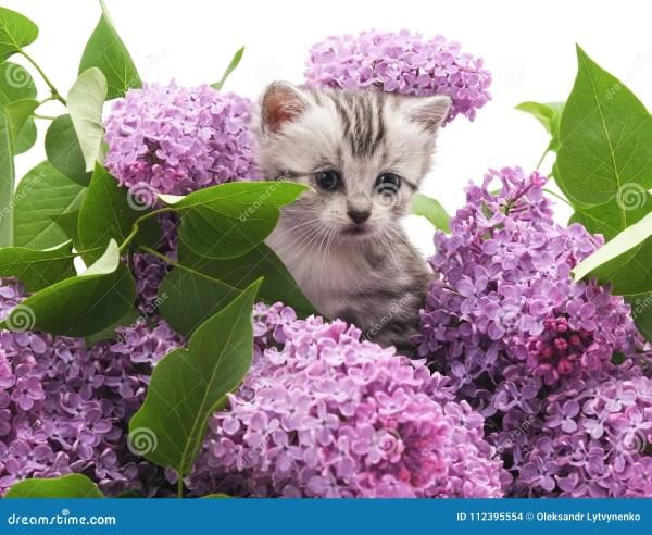 Котенок в сирени стоковое фото. изображение насчитывающей ...