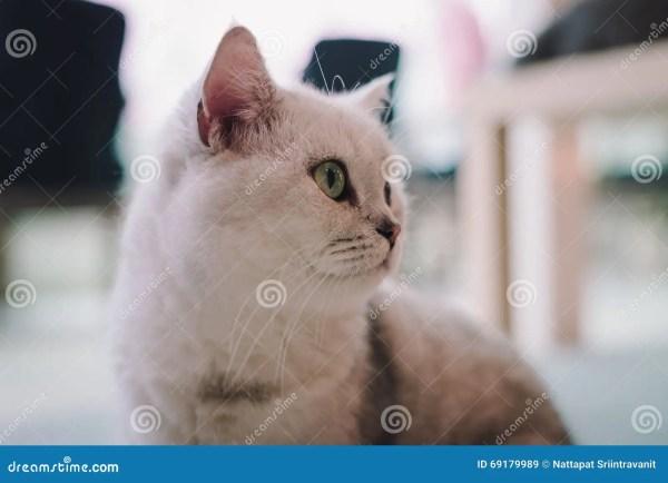 Портретная живопись кота в комнате заполнила с мягким ...