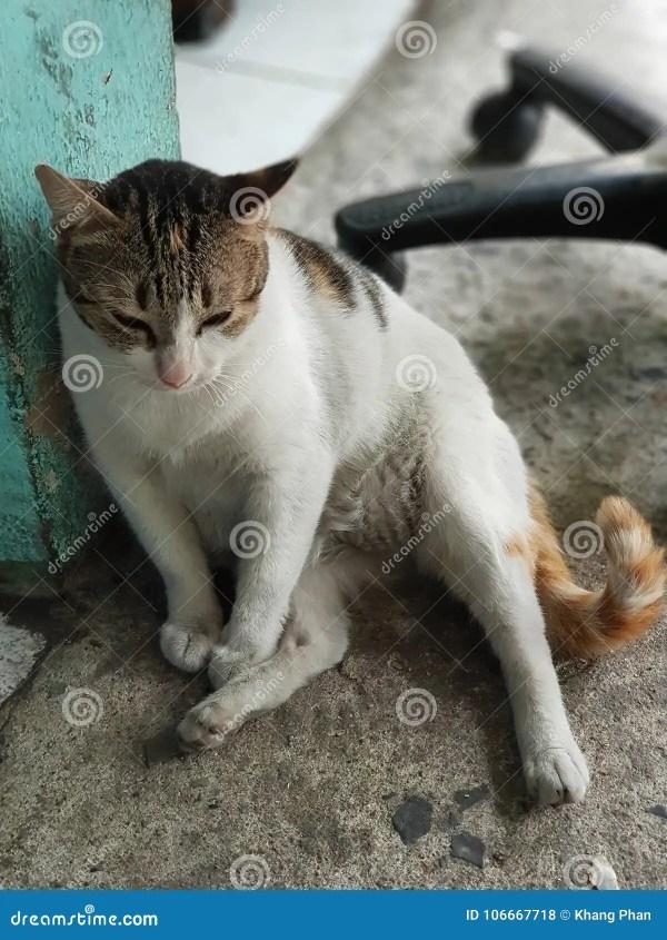 Пьяный кот стоковое фото. изображение насчитывающей ...