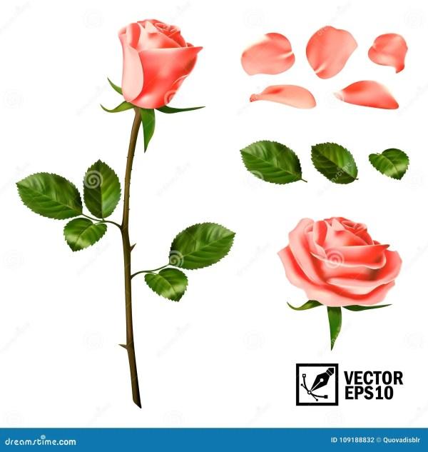Реалистический комплект элементов вектора розовых роз