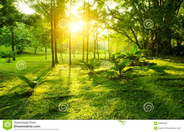 Тропический зеленый восход солнца леса Стоковое Фото ...
