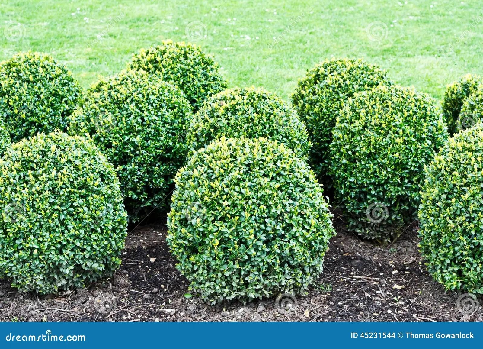 修剪的花園植物 庫存照片. 圖片 包括有 葉子, 修剪的花園, 灌木, 裝飾品, 綠色, 國界的, 草坪 - 45231544